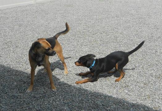 Dog Boarding North Jersey