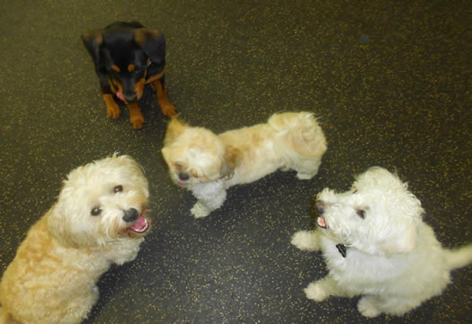 Dog Training Boarding New Jersey
