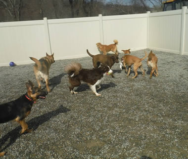 Dog Boarding NJ