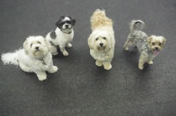 Dog Boarding Morris County NJ