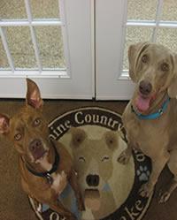 Dog Day Care NJ