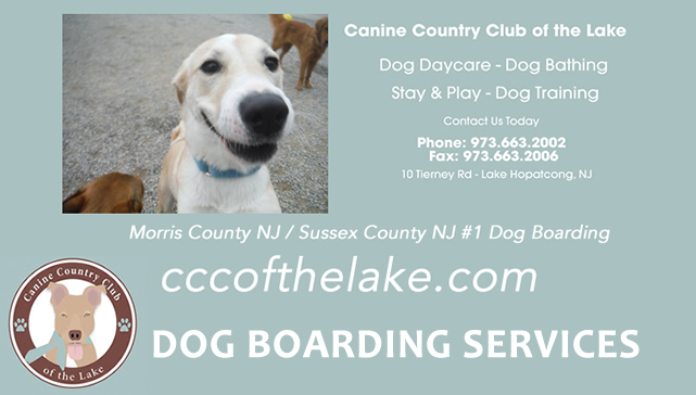 Dog Boarding Hopatcong Nj