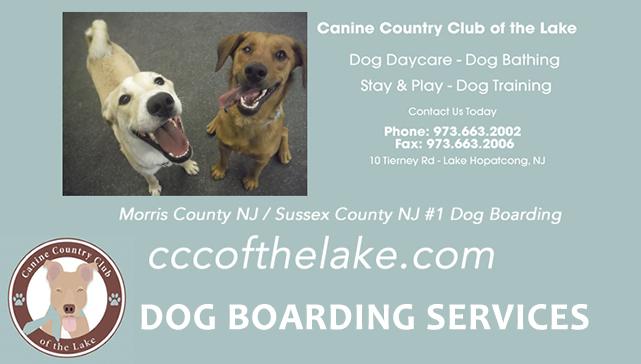 Dog Training Lake Hopatcong Nj