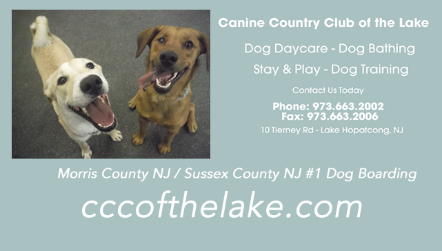 Dog Training Boarding In South Jersey